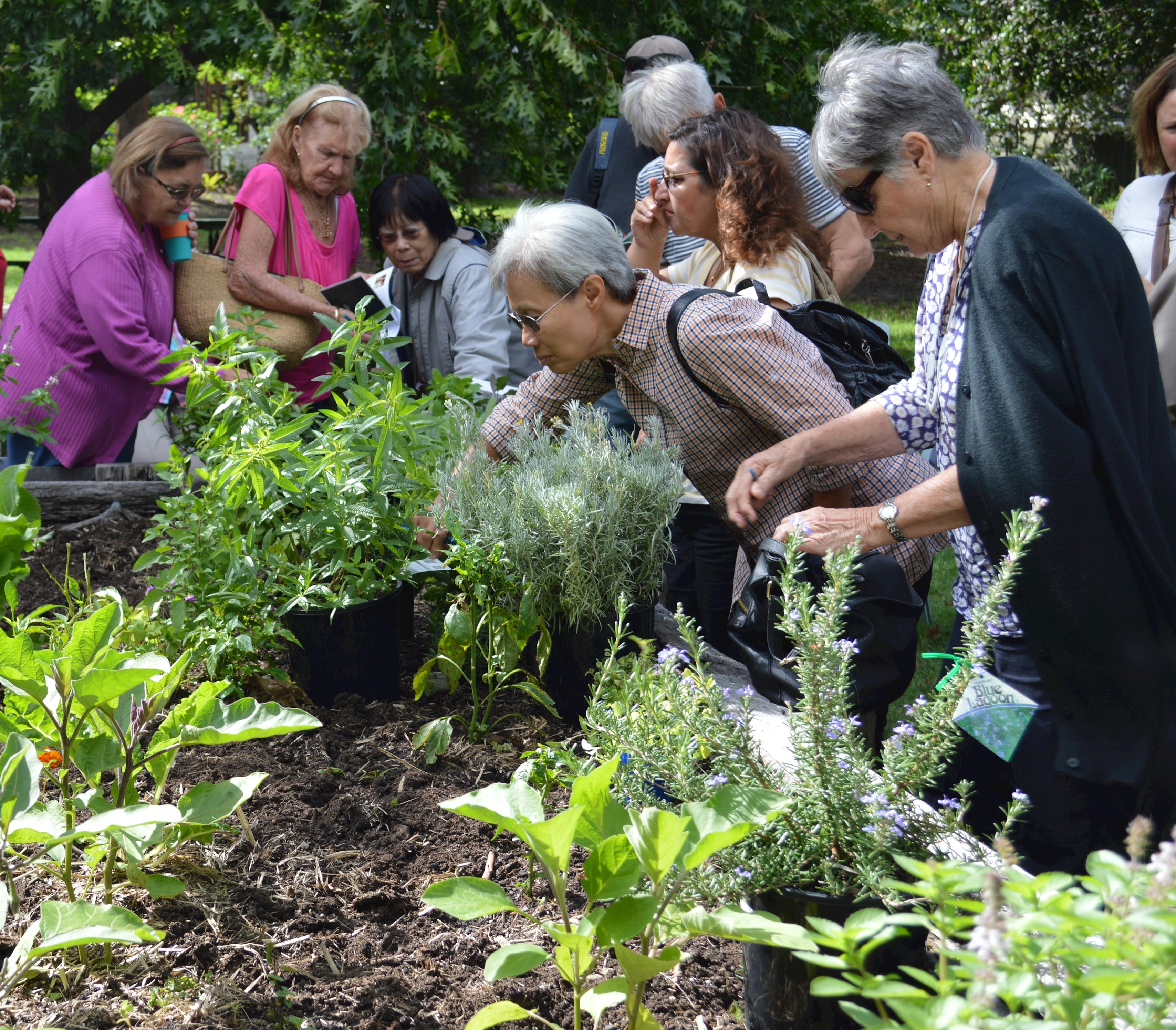 A group of people looking at a community garden
