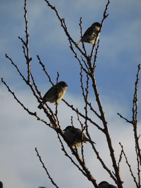 3 sparrows