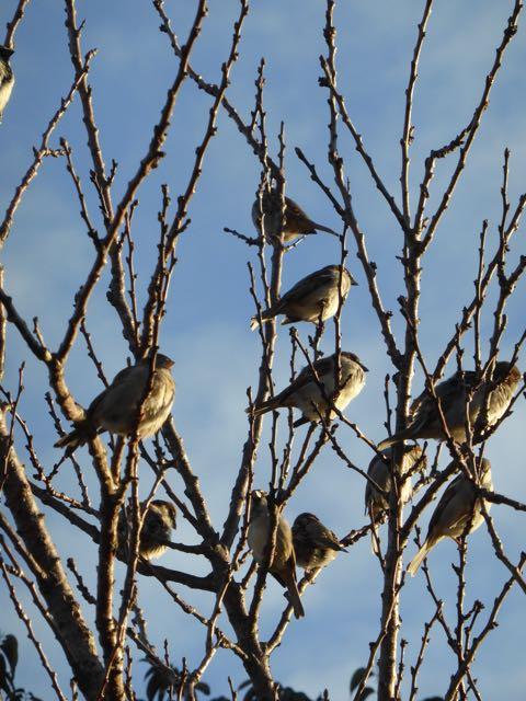 sparrow tree 2
