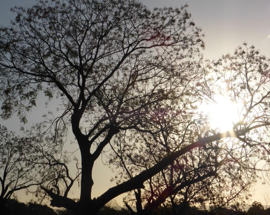 sunlight tree 2
