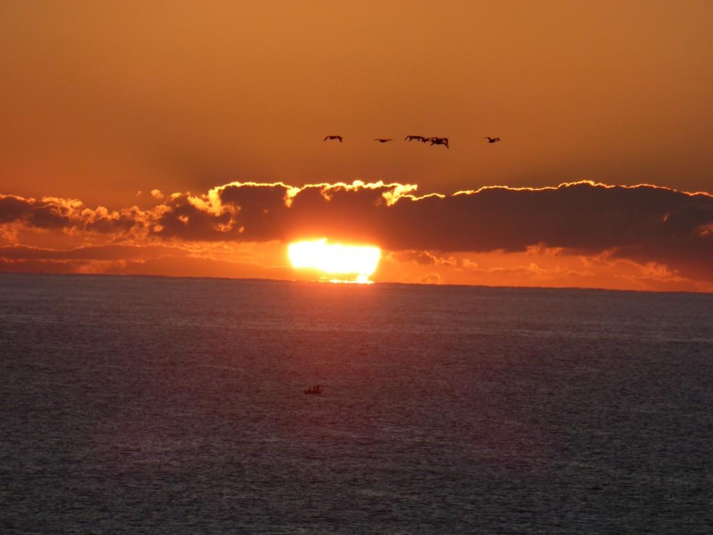 sunrise swans 2
