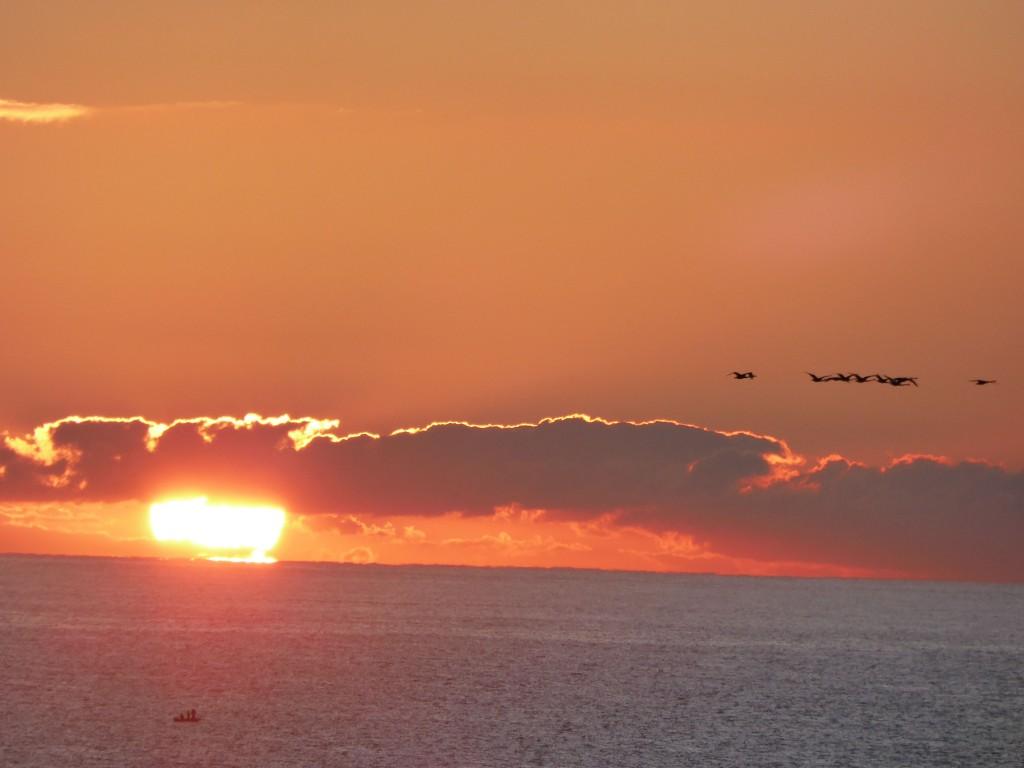 sunrise swans 3