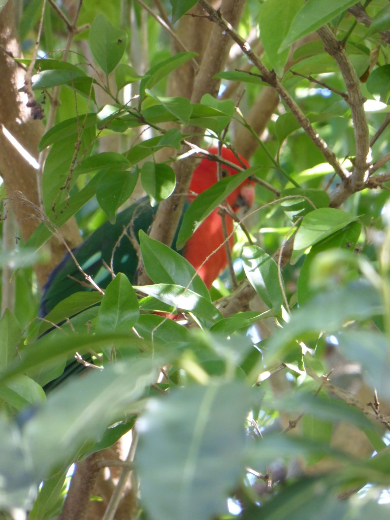 parrot hiding 1