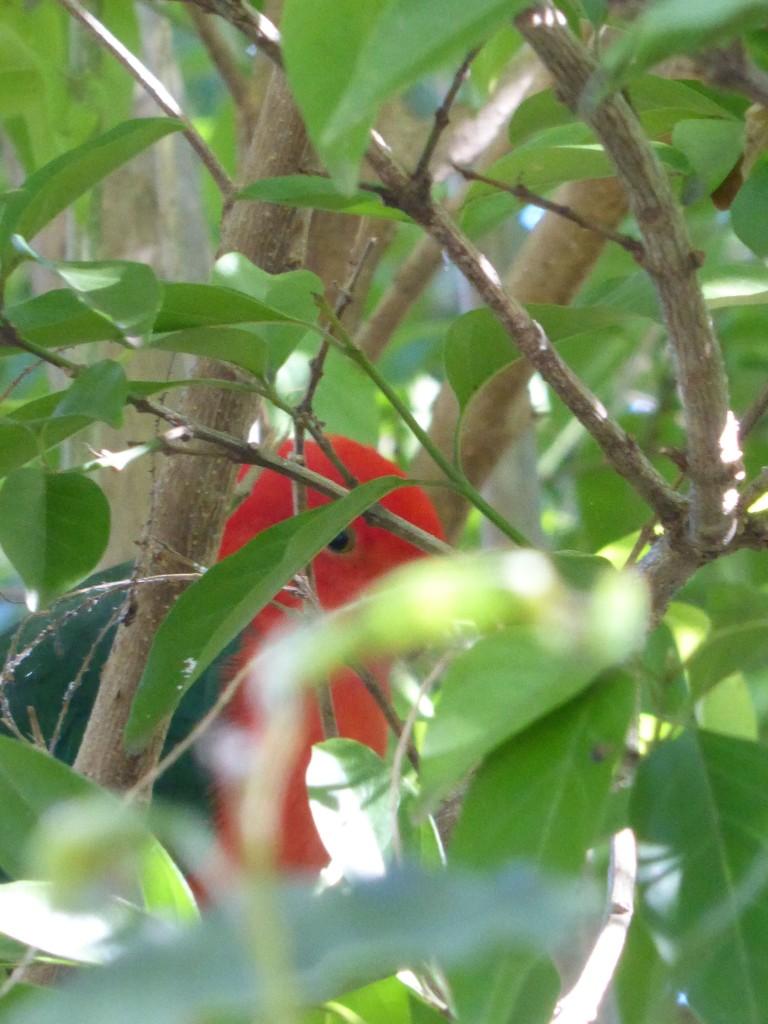 parrot hiding 2