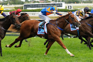 Starspangledbanner on his way to win the Oakleigh Plate 2010