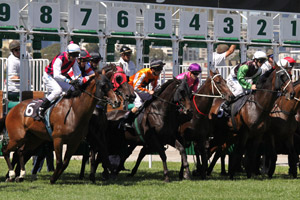 2010 Melbourne Cup Field