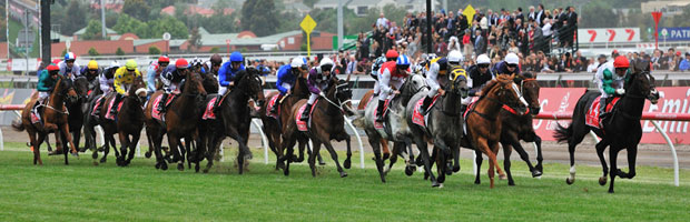 Melbourne Cup Field 2011