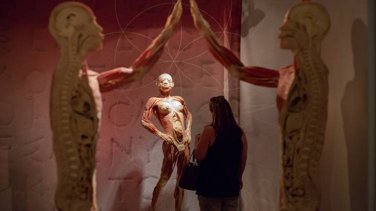 Anatomy Meets Art In Real Bodies The Exhibition 2ser