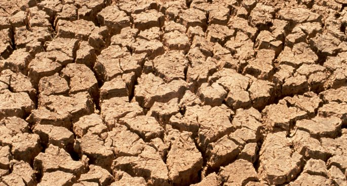 a vegetarian approach to the drought crisis 2ser