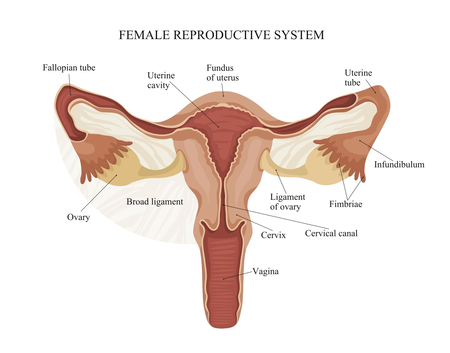 Flushing Blocked Fallopian Tubes Can Improve Fertility 2ser