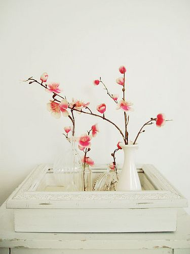 Cherry Blossoms in assorted vases