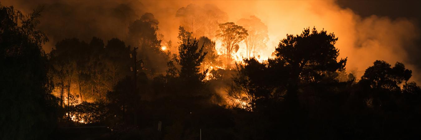 Bushfire 20200129