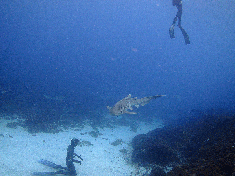 A FREEDIVER WEARING DIVER FINS ENJOYS THE FREEDOM OF BEING BELOW THE SURFACE UNRESTRICTED.