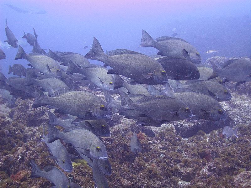 Plenty of beautiful fish life.