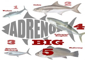 Adreno BIG 5 Spearfishing Competition