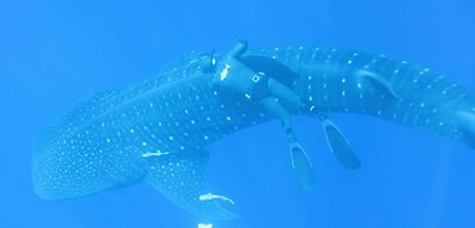Ascension Island is home to more than just big tuna!
