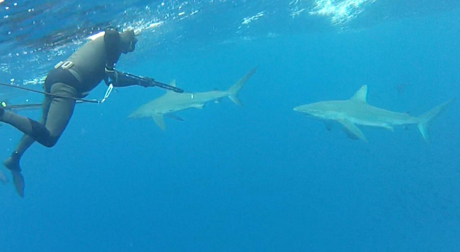 Adreno founder, Tim Neilsen, facing up to some intimidating galapagos sharks