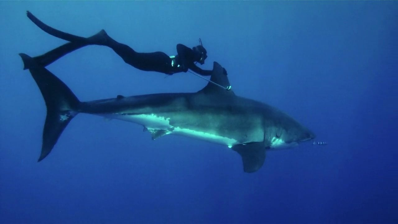 Kimi with the Great White Shark she encountered