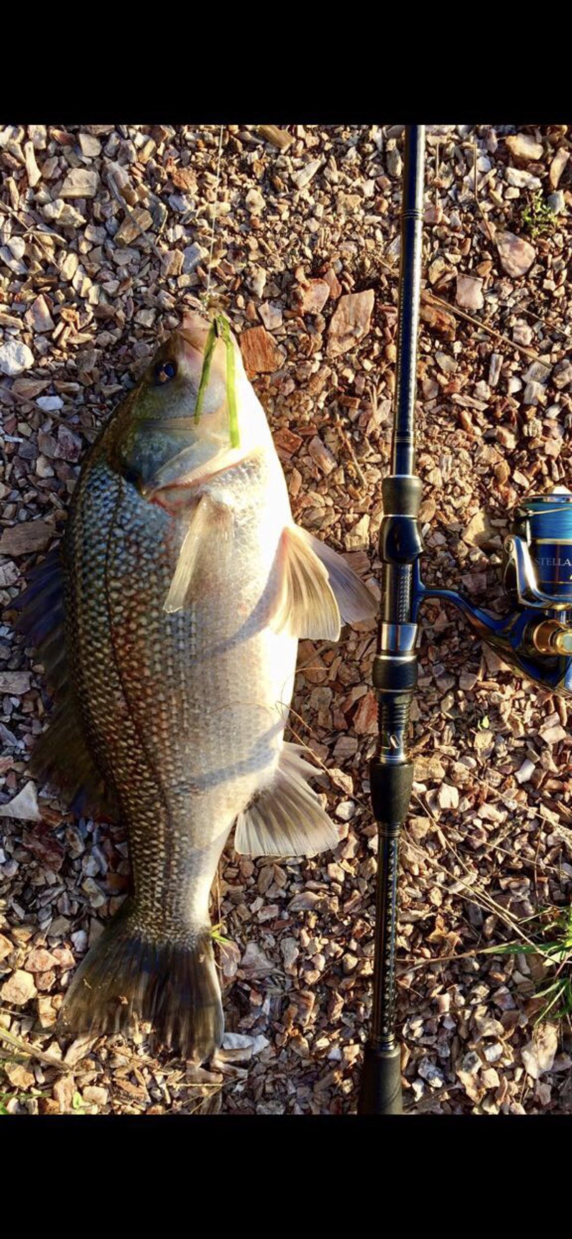 Australian Fishing Online