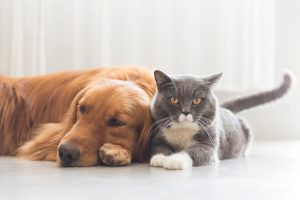 open home pets