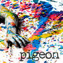 Pigeon - Apex