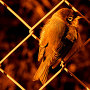 Silvereye - Warning The Wounded
