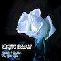 Coast & Ocean - White Roses ft. Alice Hills.