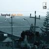 Tangled Star - seabirdtown