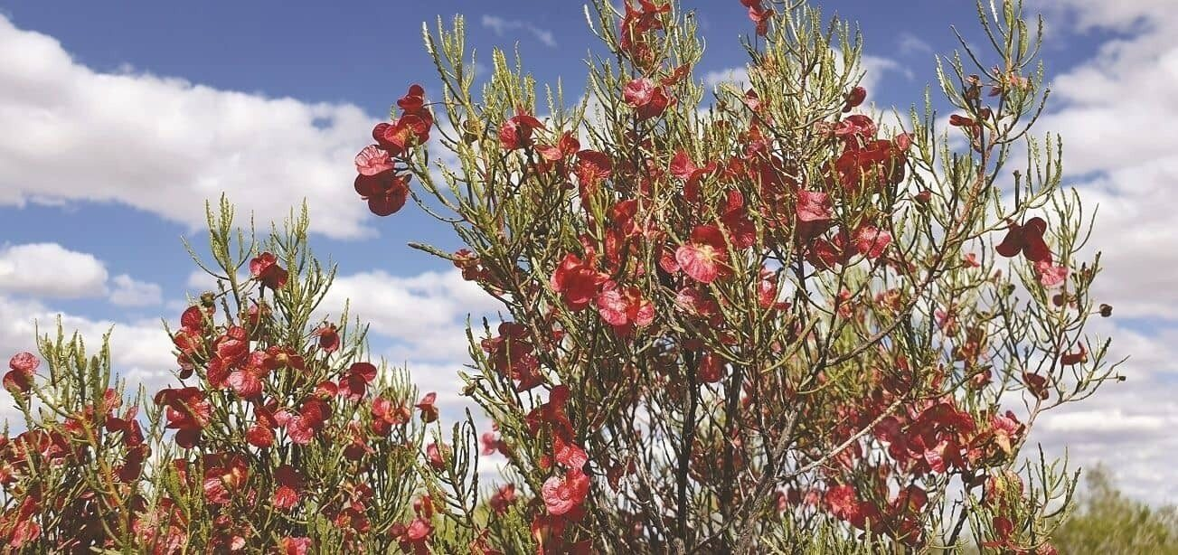 Goldfields Church God Talk Flowers hero