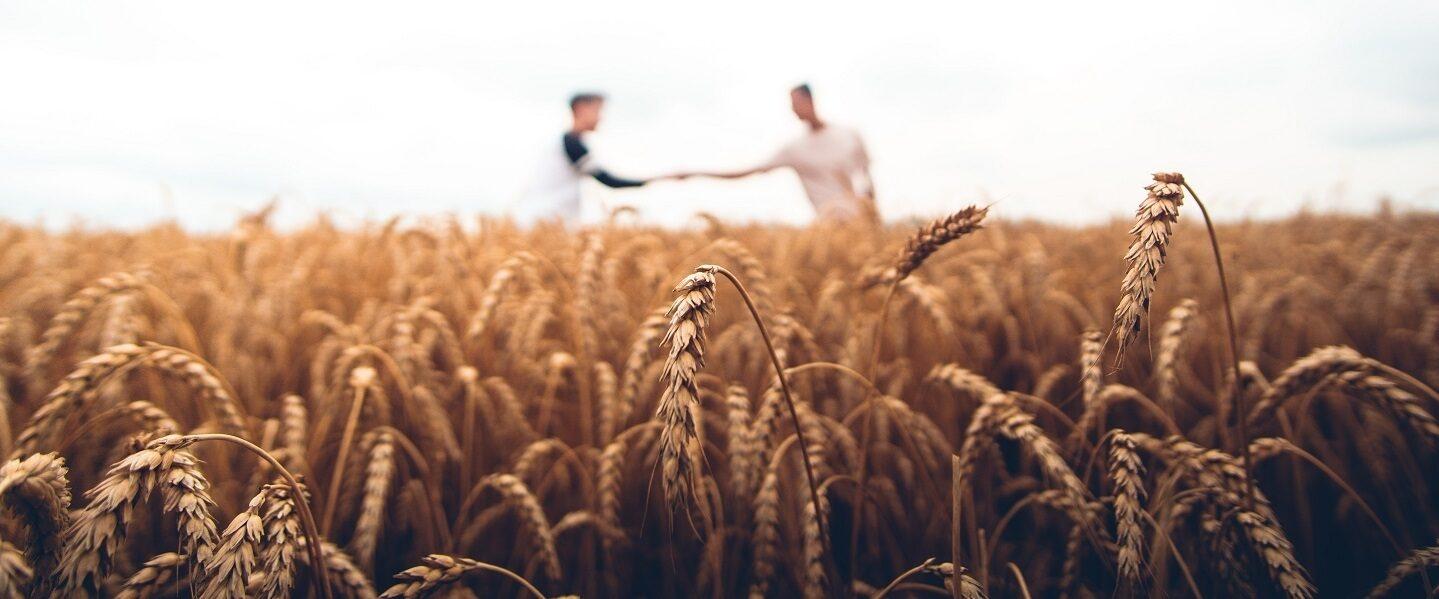 Harvest by warren wong unsplash banner