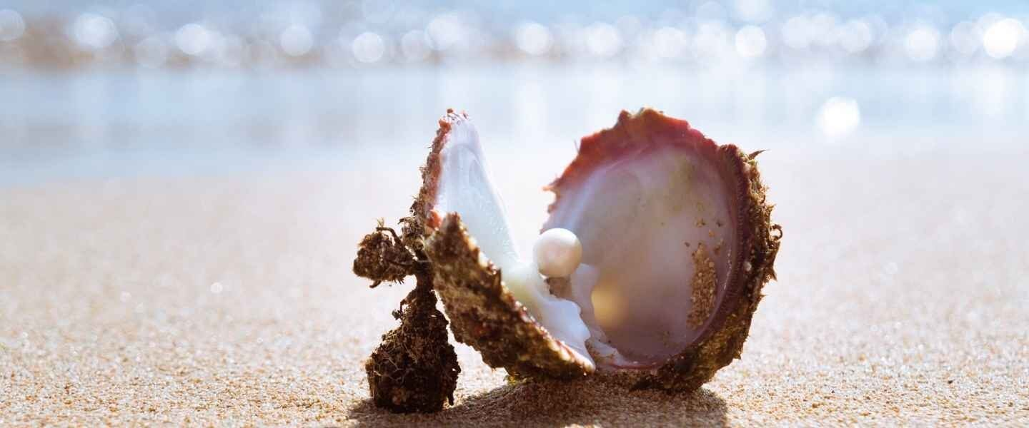 Oyster with pearl on beach