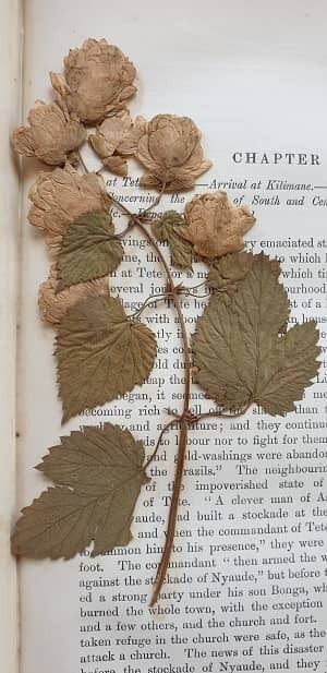 Archives pressed flower in book 1