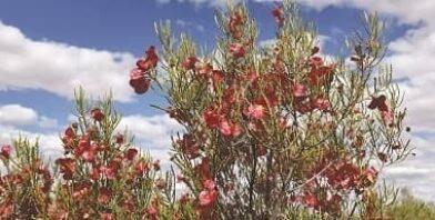 Goldfields God talk Flowers thumbnail