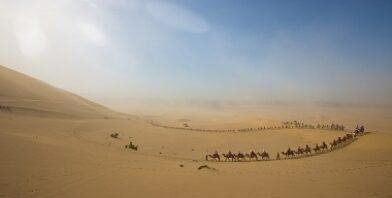 Camel caravan group sand blue sky thumbnail