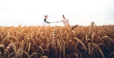 Harvest wheat farmer thumbnail