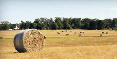 Harvest farm sheep thumbnail