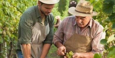 Heartfelt obedience men in vineyard thumbnail