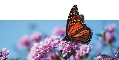 St barts butterfly thumbnail