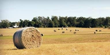 Reflection: The Harvest is Plentiful
