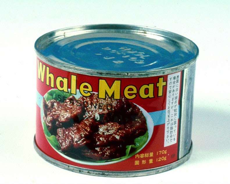 Tinned whale meat, ANMM Collection