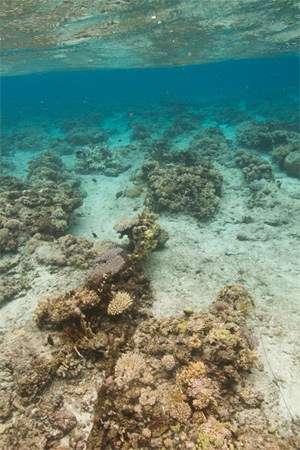 View of reef underwater