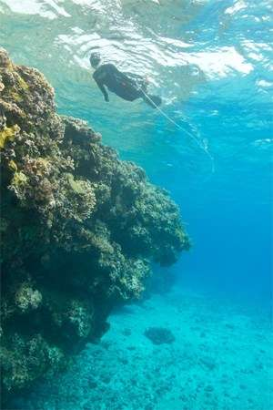 Snorkelling on the reef at West Islet