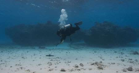 Scuba diver searching the ocean floor during a reconnaissance trip to Frederick Reef October 2009