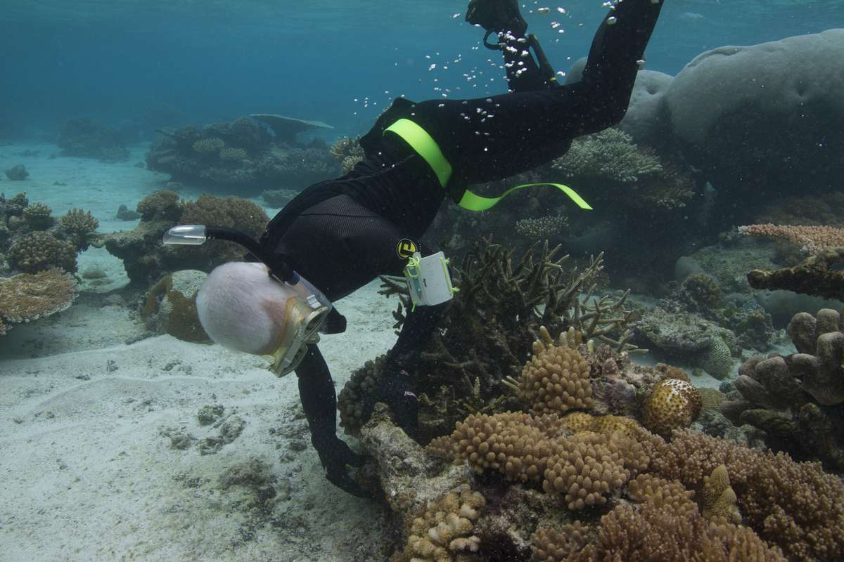 Kieran underwater looking at anchor chain