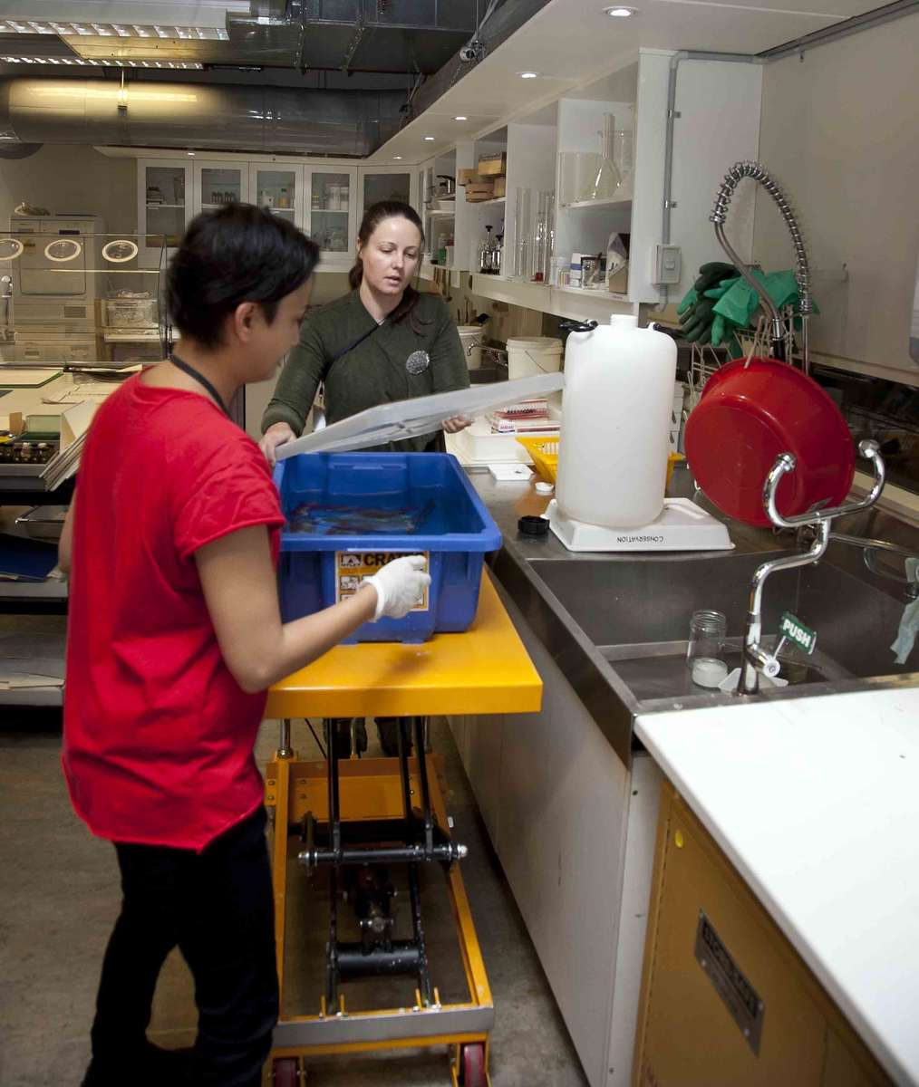 Registrar Anupa Shah and conservator Rebecca Dallwitz draining solution from the gudgeon