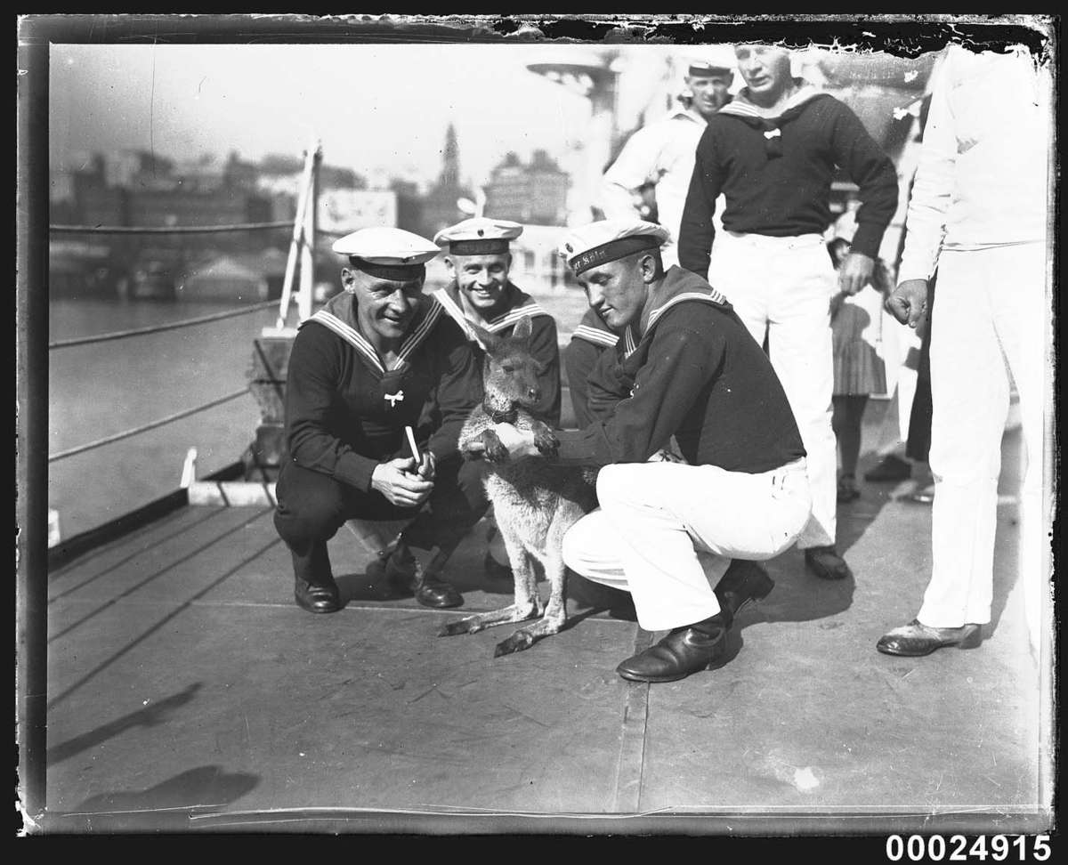 German sailors with a wallaby on board the German cruiser KOLN, May 1933 Photographer: Samuel J Hood Studio ANMM Collection