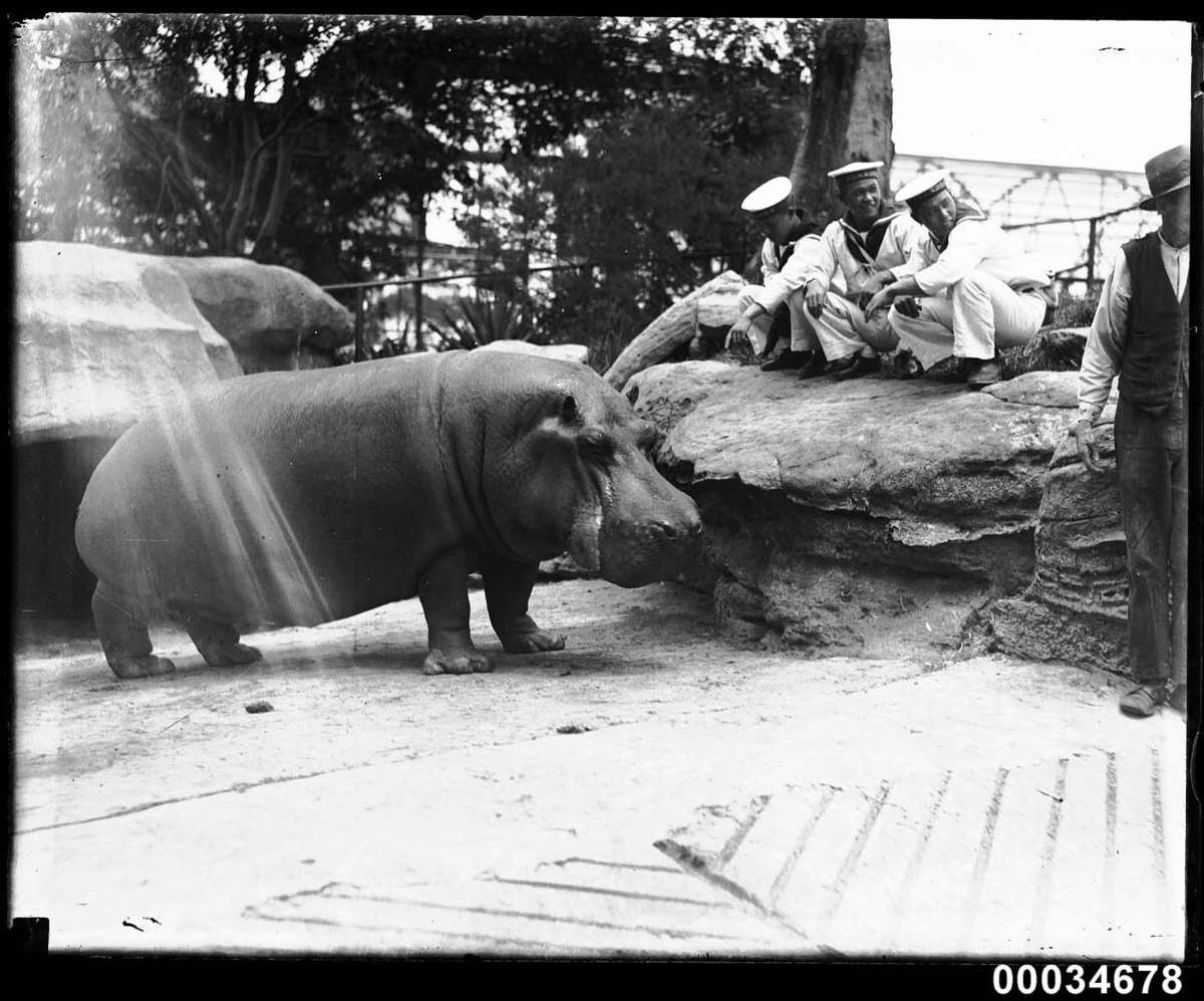 Sailors from the Japanese Imperial Naval Squadron observe a hippopotamus at Taronga Zoo, 28 January 1924 Photographer: Samuel J Hood Studio ANMM Collection