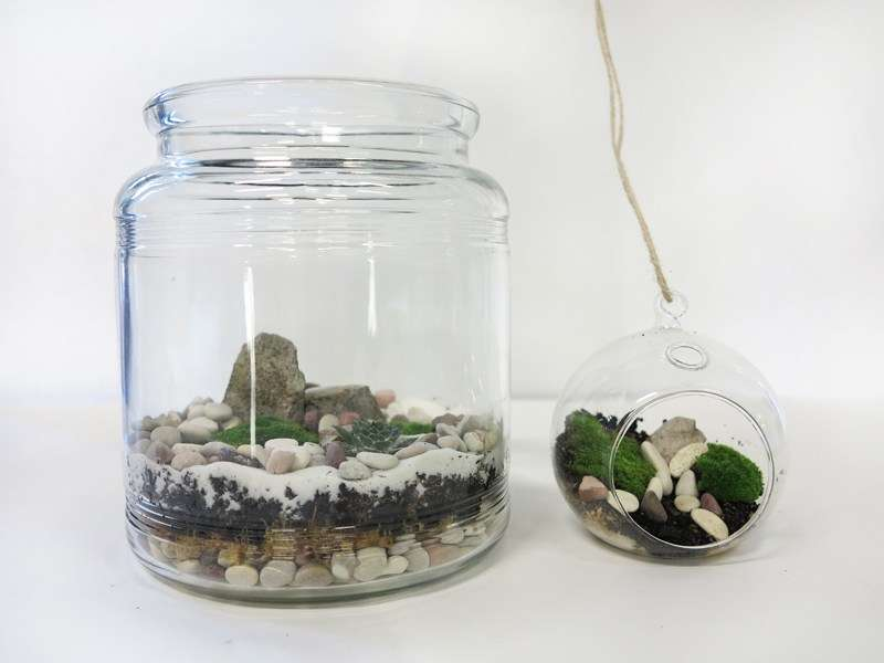 The finished terrariums!