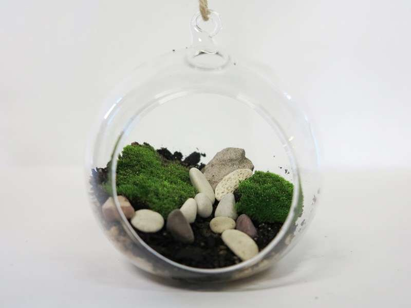 Use unusual glass vessels to create a terrarium