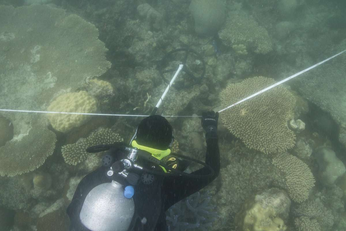Jacqui Mullen from the Silentworld Foundation searching with a metal detector of Eel Reef. Photo: Xanthe Rivett, Silentworld Foundation.